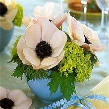 AGROBITS Saat: Sale100pcs Anemone Bonsai Hochzeit