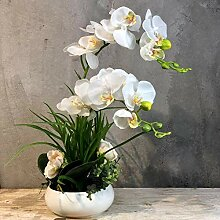 AIOXY Kunstpflanze Orchidee weiß-creme mit