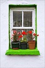 Alu Dibond 20 x 30 cm: Topfpflanzen auf der