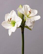 Amaryllis, 72cm, natural touch, Durchmesser 9cm,
