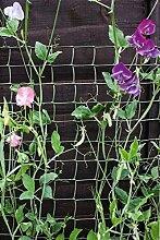 Ambassador Kletterpflanze Stützgrüner 30 x 1m