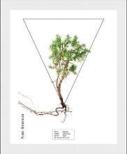 andas Bild Pflanze 30x40 cm weiß Bilder mit