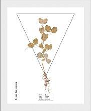 andas Bild Pflanze 50x60 cm weiß Bilder mit