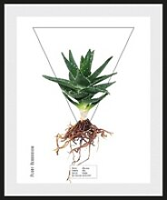 andas Bild Pflanze, mit Rahmen 30 cm x 40 cm x 2,4