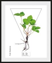 andas Bild Pflanze, mit Rahmen 50 cm x 60 cm x 2,4