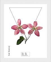 andas Bild Pflanze, mit Rahmen B/H/T: 30 cm x 40