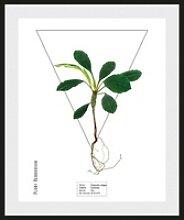 andas Bild Pflanze, mit Rahmen weiß 30 cm x 40 cm