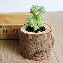 AnnBlue Künstliche Sukkulenten Pflanzen Woody