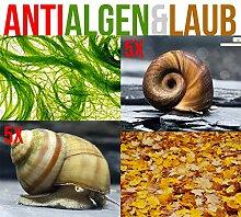 Anti Algen & Laub Reinigungstruppe für den Gartenteich - LEBENDES Teichpflege Team + 1 x NH TOXEX BALL