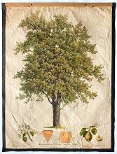 Antike Birnenbaum Lehrtafel von Kautsky und G. v.
