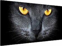 Apalis 108738 Magnettafel Cats Gaze Memoboard Design Quer Metall Magnet Pinnwand Motiv Wand Stahl Küche Büro, 37 x 78 cm