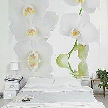 Apalis Fototapete Orchidee in Weiß - Vliestapete