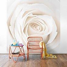 Apalis Rosen Vliestapete - Blumentapete Pretty