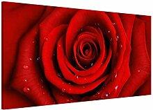 Apalis Rosenbild Magnettafel - Rote Rose mit
