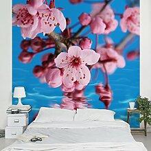 Apalis Vliestapete Blumentapete Kirschblüte