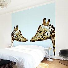 Apalis Vliestapete Giraffes In Love Fototapete