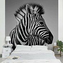 Apalis Vliestapete Zebra Baby Portrait II