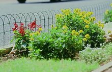 Apollo Gartenzaun mit Kunststoffbeschichtung 10mx900mm