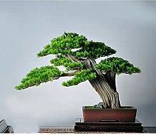 Artificial Tree Künstliche Kiefer Bonsai