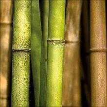 artissimo, Glasbild, 50x50cm, AG8019A, Bamboo I,