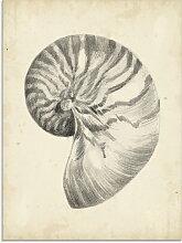 Artland Glasbild Antike Muschel Lehre I 45x60 cm,