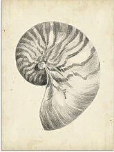 Artland Glasbild Antike Muschel Lehre I 60x80 cm,