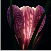 Artland Glasbild Beleuchtet 50x50 cm, lila