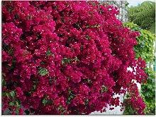 Artland Glasbild Blumen 80x60 cm, rot Glasbilder