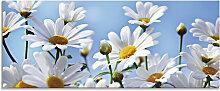 Artland Glasbild Blumen - Margeriten 125x50 cm