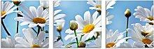 Artland Glasbild Blumen - Margeriten 30x30 cm