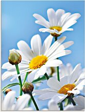 Artland Glasbild Blumen - Margeriten 45x60 cm