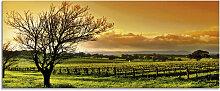 Artland Glasbild Landschaft mit Weinbergen 125x50