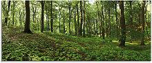 Artland Glasbild Panorama von einem grünen