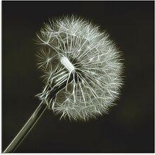 Artland Glasbild Pusteblume 50x50 cm, schwarz