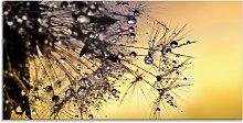Artland Glasbild Pusteblume mit Tautropfen benetzt