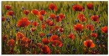 Artland Glasbild Sommermohn, Blumen (1 Stück)
