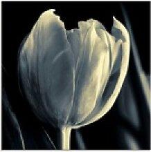 Artland Glasbild Tulpe, Blumen (1 Stück) 20 cm x