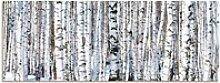 Artland Schlüsselbrett Winterbirkenwald