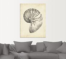 Artland Wandbild Antike Muschel Lehre I 30x40 cm,