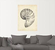 Artland Wandbild Antike Muschel Lehre I 45x60 cm,