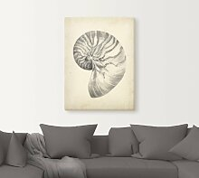 Artland Wandbild Antike Muschel Lehre I 60x80 cm,