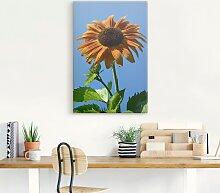 Artland Wandbild Sonnenblume 40x60 cm,