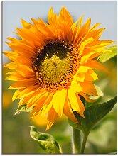 Artland Wandbild Sonnenblume 90x120 cm,