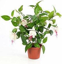 artplants.de Künstliche Fuchsie THAYNARA, 8