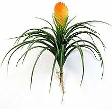 artplants.de Kunst Vriesea Benicia, gelb - orange,