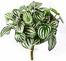 artplants.de Kunstpflanze Fittonia JANDIRA, 50