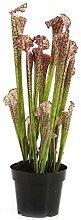 artplants.de Kunstpflanze Sarracenia Madison,