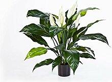 artplants.de Set 'Künstliche Einblatt Pflanze