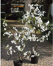 artplants.de Set 'Künstlicher Baum Birnenbaum