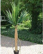 artplants - Großer Deko Agavenbaum mit Trieben am Stamm, 210 cm - Kunstbaum / Agave Pflanze